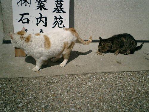02)'ジンジャー・ベーカー'(本名'ボス')&'エディ潘'(本名'シーザー').JPG