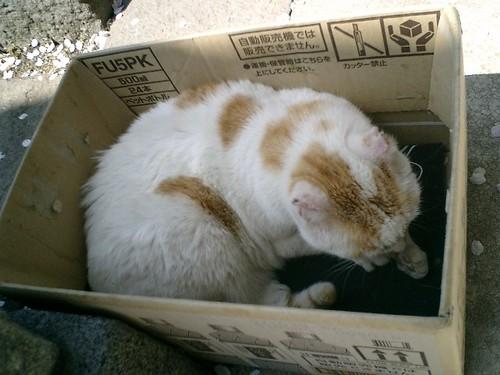 03)時間を少し置いてから来たら、私の期待通りに箱へ入った'ジンジャー・ベーカー'。.JPG
